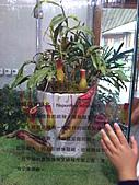 Flora exposition:DSC_0922.jpg