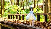 春天紅色葉雨2016.04:DSC07924.04.68.04.jpg