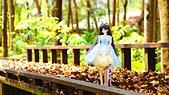 春天紅色葉雨2016.04:DSC07930.02.68.04.jpg