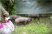 龍寶郊遊~宜蘭天山農場:DSC05897.JPG