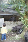 龍寶郊遊~宜蘭天山農場:DSC05904.JPG
