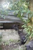 龍寶郊遊~宜蘭天山農場:DSC05905.JPG