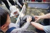 龍寶郊遊~宜蘭天山農場:DSC05893.JPG