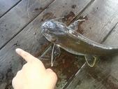 魚:20130717_143059(001).jpg