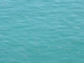 魚:IMGP1056(001).jpg