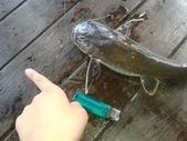 魚:20130717_143104(001).jpg