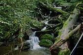 拉拉山慈湖一日遊:DSC_2175.jpg