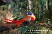 紙風車台灣動物昆蟲創意展:IMG_7313.jpg