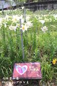 內湖碧山巖百合花季:IMG_9515.jpg