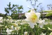 內湖碧山巖百合花季:IMG_9485.jpg