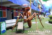 紙風車台灣動物昆蟲創意展:IMG_7301.jpg
