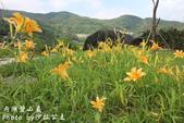 內湖碧山巖百合花季:IMG_9537.jpg