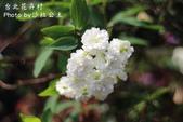 台北花卉村:IMG_7713.jpg