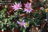 台北花卉村:IMG_7712.jpg