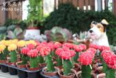 台北花卉村:IMG_7706.jpg