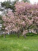 北海道:SANY00951