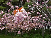 北海道:SANY00991