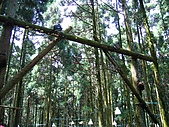馬武督探索森林:IMG_0102