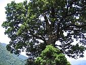 馬武督探索森林:IMG_0132