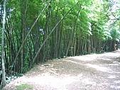 馬武督探索森林:IMG_0139