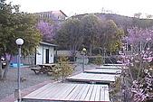 清境維也納露營區-環境景觀(小太陽):uvs090703-001.jpg
