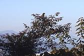 清境維也納露營區-環境景觀(小太陽):uvs090720-089.jpg