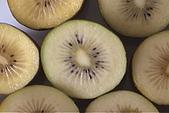 清境維也納露營區-黃金奇異果(獼猴桃)(小太陽):奇異果-009-黃金色果肉