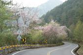 2010 阿里山櫻花:DSC01851.JPG
