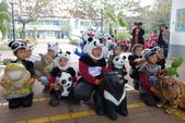 紙熊貓展:DSC02669.JPG