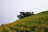 2011花東行-太麻里-六十石山:2011花東187.JPG