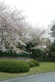 2010 京阪神賞櫻行~名古屋:DSC03840.JPG