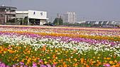 2010橋頭花海:DSC00756.JPG