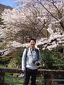 2010 京阪神賞櫻行~養老之瀧:DSC02074.JPG