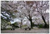 2016 九州水前寺:2016日本九州_1016.JPG