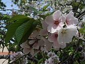 2010阿里山.櫻花.春浪漫:20100318阿里山0032.JPG
