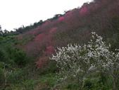 2012 埔里-霧社-廬山:20120205 廬山0004.JPG