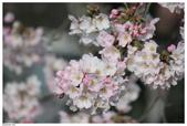 2016 九州阿蘇溫泉:2016日本九州_1035.JPG