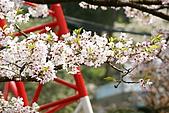 2010阿里山.櫻花.春浪漫:20100318阿里山0290.JPG