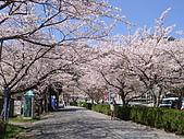 2010 京阪神賞櫻行~養老之瀧:DSC02094.JPG