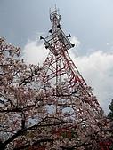 2010阿里山.櫻花.春浪漫:20100318阿里山0044.JPG