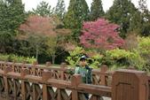 2010 阿里山櫻花:DSC01749.JPG