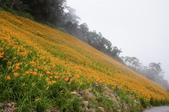 2011花東行-太麻里-六十石山:2011花東195.JPG