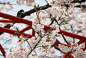 2010阿里山.櫻花.春浪漫:20100318阿里山0294.JPG