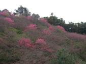 2012 埔里-霧社-廬山:20120205 廬山0011.JPG