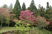 2010 阿里山櫻花:DSC01754.JPG