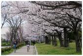 2016 九州福岡:2016日本九州_1613.JPG