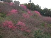 2012 埔里-霧社-廬山:20120205 廬山0012.JPG