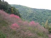 2012 埔里-霧社-廬山:20120205 廬山0013.JPG