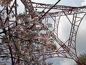 2010阿里山.櫻花.春浪漫:20100318阿里山0047.JPG