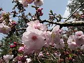 2010阿里山.櫻花.春浪漫:20100318阿里山0051.JPG